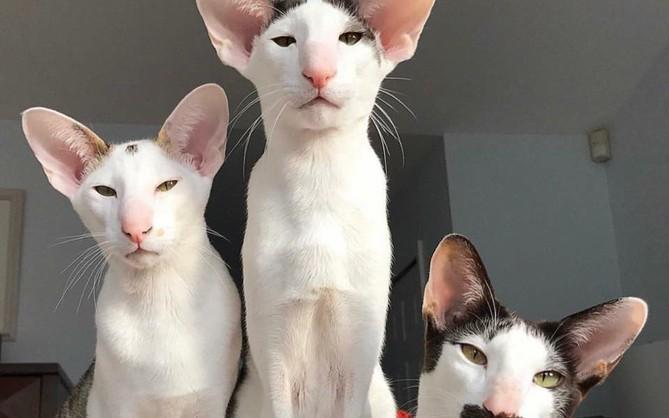 Bộ ảnh gia đình mèo xấu lạ mỗi con một kiểu nhưng đứng cùng nhau lại chất thôi rồi