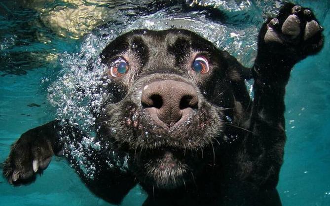 Chùm ảnh: Khi lũ boss cũng theo trend chụp ảnh dưới nước cho bằng bạn bằng bè