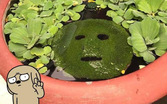 Thanh niên lấy mặt nạ tảo biển của vợ thả vào lu nước xem có mọc cây hay không và kết quả cũng hay ho ra phết!