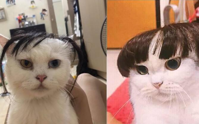 Chùm ảnh: Các sen thi nhau đội tóc giả cho boss xem đứa nào bảnh nhất