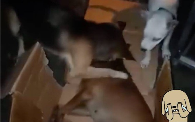 Clip cảm động: Chú chó liên tục lay và ôm lấy bạn đã mất vì ăn phải bả