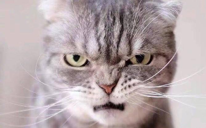 Boss mèo bỗng nổi tiếng MXH vì gương mặt cau có khó ở chẳng ai bằng