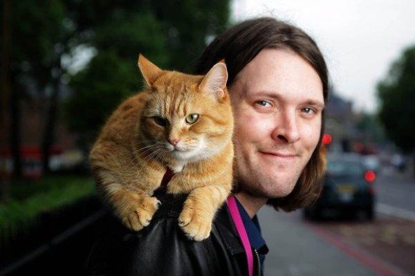 Cứu rỗi chàng nghệ sĩ nghèo vào thời điểm khốn khó nhất, chú mèo vàng trở thành nguồn cảm hứng của cả thế giới - Ảnh 1.
