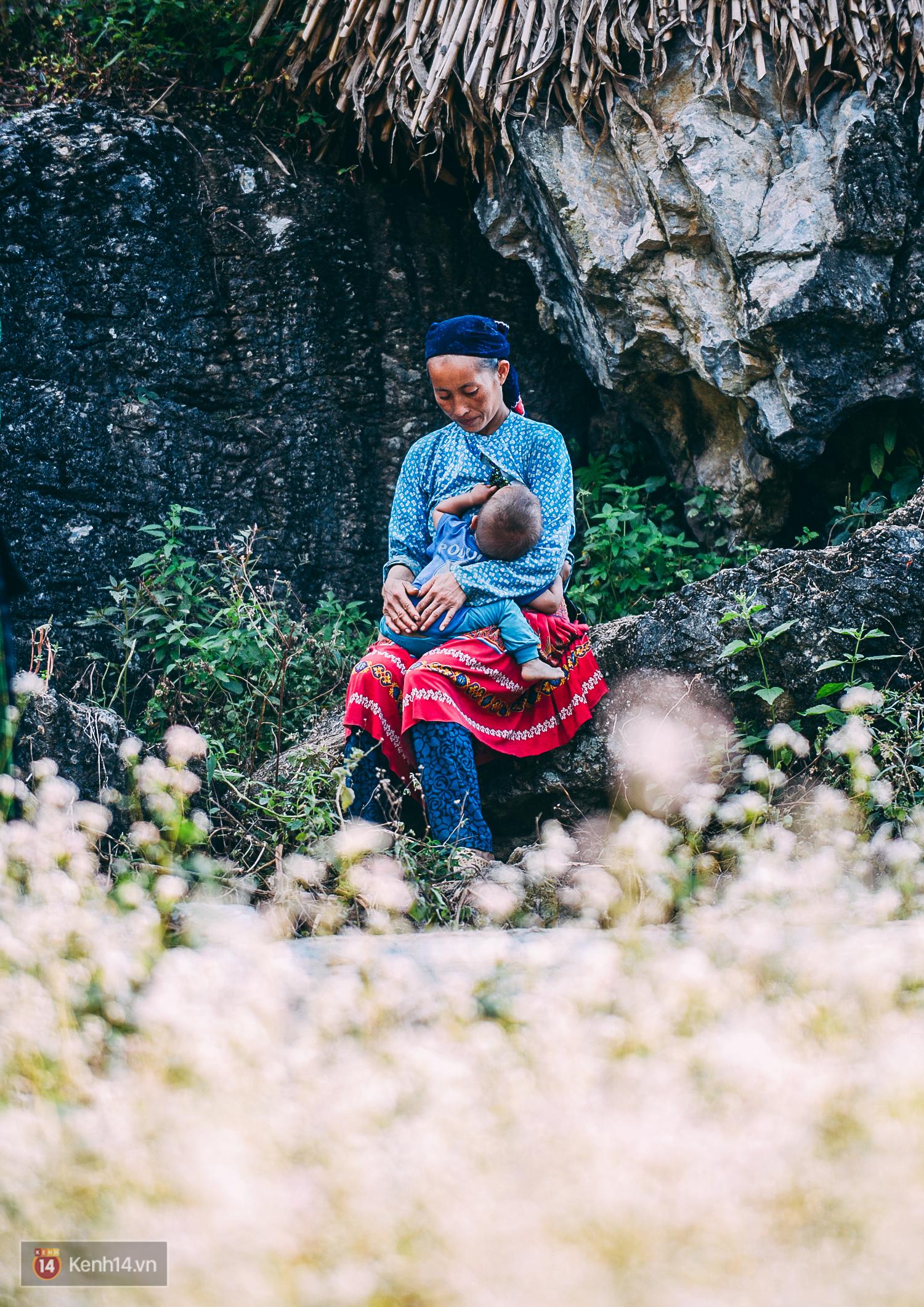 Ngắm mùa hoa tam giác mạch đẹp mê mải về ở Hà Giang - Ảnh 11.