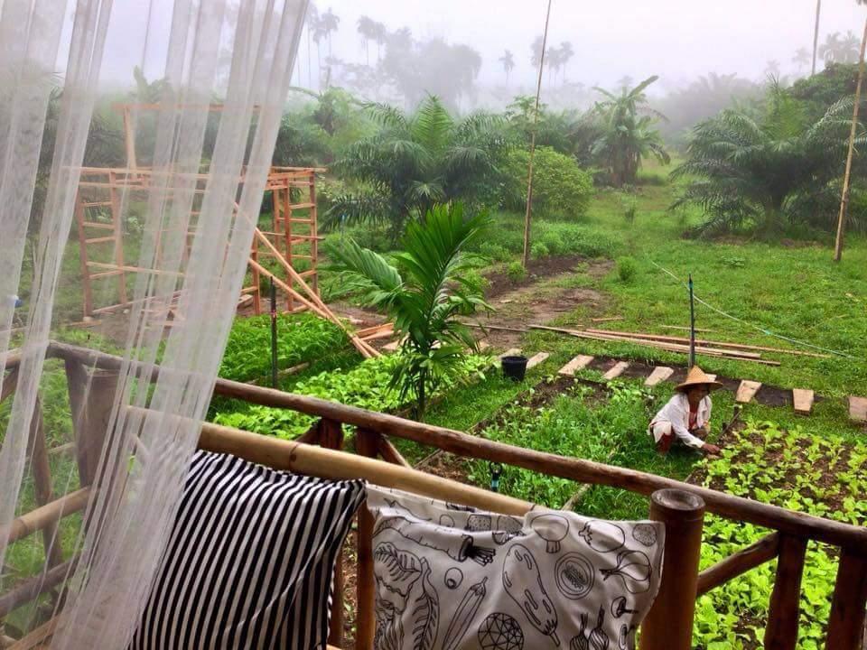Ngôi nhà giữa vườn rau này đang được cư dân mạng Việt share điên đảo! - Ảnh 3.