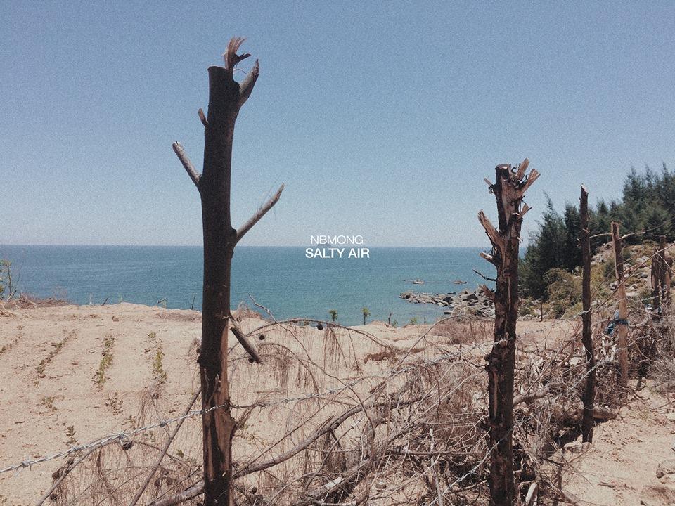 Đẹp mê hoặc như biển Thiên Cầm (Hà Tĩnh): Thêm một địa điểm mà hè này bạn phải đi! - Ảnh 11.