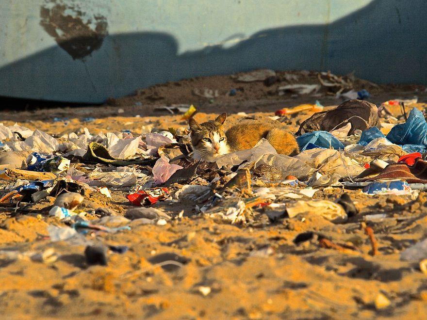 Chùm ảnh chấn động về ảnh hưởng của ô nhiễm môi trường đối với các loài động vật toàn cầu - Ảnh 15.
