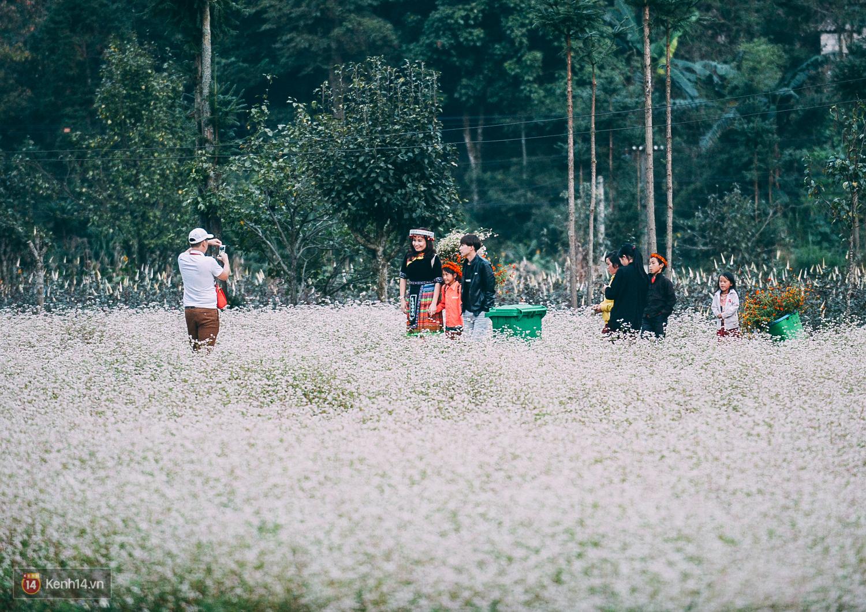 Ngắm mùa hoa tam giác mạch đẹp mê mải về ở Hà Giang - Ảnh 13.