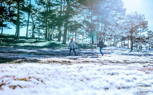 Cánh đồng tuyết đẹp đến ngỡ ngàng ở Đà Lạt - Ảnh 12.