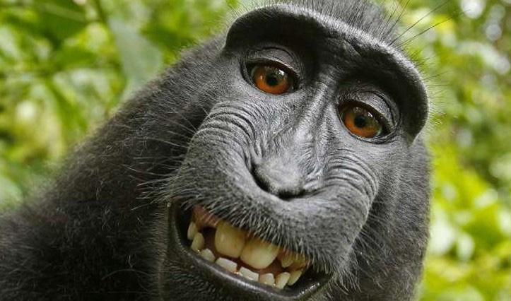 8 sự thiệt ít ai biết về loài khỉ - sinh vật nhí nhố nhất hành tinh - Ảnh 1.