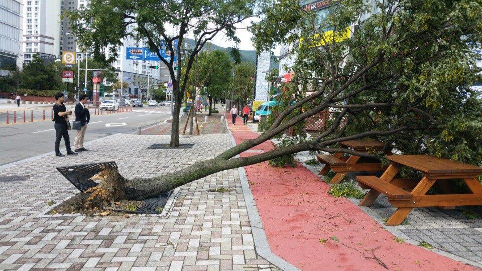 Cảnh tượng ngập lụt, đổ nát kinh hoàng sau bão tại siêu đô thị Busan của Hàn Quốc - Ảnh 19.