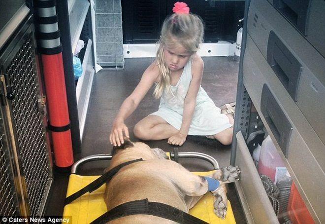 Giây phút vĩnh biệt đầy xúc động của cô bé 6 tuổi với chú chó mù và điếc - Ảnh 2.