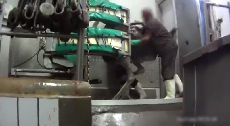 Video: Những hình ảnh ghê rợn về quá trình lột da đà điểu làm túi hàng hiệu - Ảnh 4.