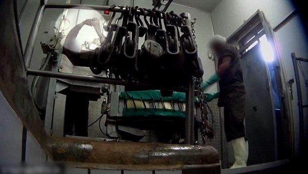 Video: Những hình ảnh ghê rợn về quá trình lột da đà điểu làm túi hàng hiệu - Ảnh 5.