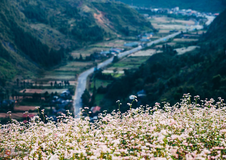 Ngắm mùa hoa tam giác mạch đẹp mê mải về ở Hà Giang - Ảnh 5.