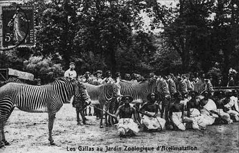 Bức ảnh bé gái châu Phi đứng trong chuồng: Câu chuyện đau lòng về những vườn thú người tại châu Âu - Ảnh 5.
