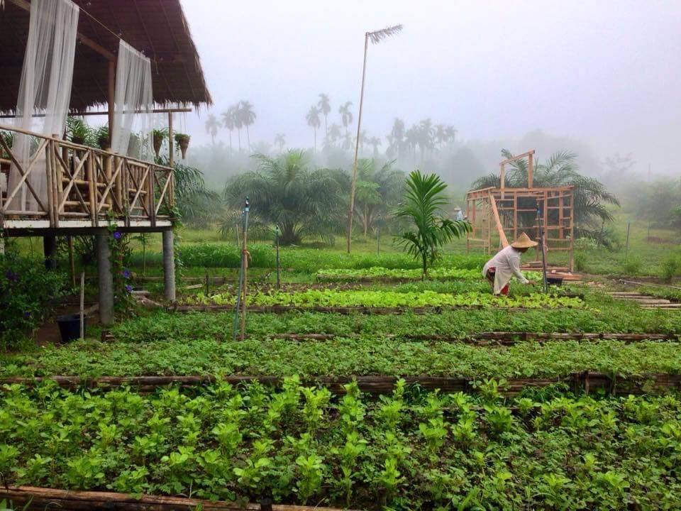 Ngôi nhà giữa vườn rau này đang được cư dân mạng Việt share điên đảo! - Ảnh 16.