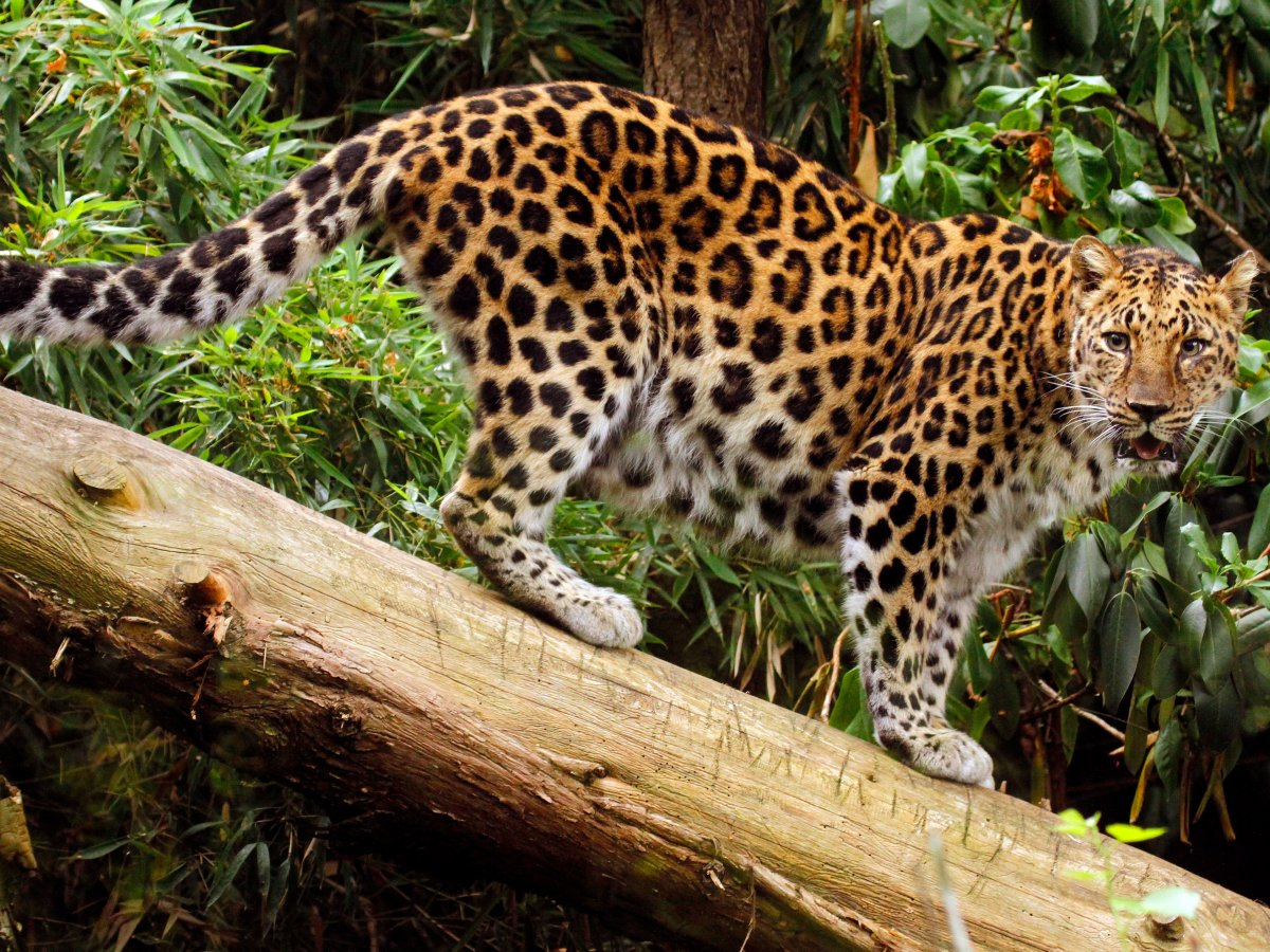 7 loài vật quý hiếm sắp vĩnh viễn biến mất khỏi hành tinh này - Ảnh 5.