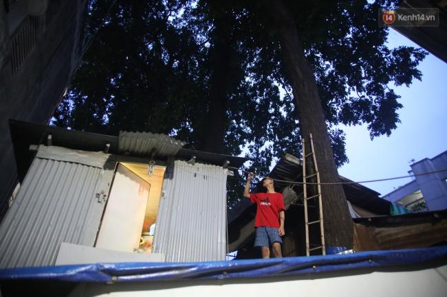 Lạ kỳ hàng cây cổ thụ trăm tuổi mọc xuyên nhà dân ngay trung tâm Sài Gòn - Ảnh 14.