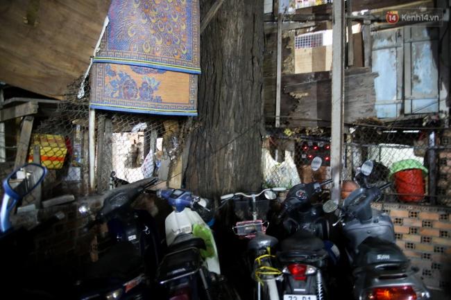 Lạ kỳ hàng cây cổ thụ trăm tuổi mọc xuyên nhà dân ngay trung tâm Sài Gòn - Ảnh 8.