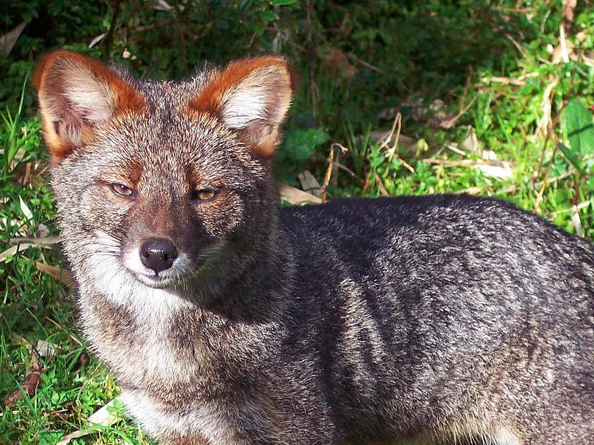 7 loài vật quý hiếm sắp vĩnh viễn biến mất khỏi hành tinh này - Ảnh 6.