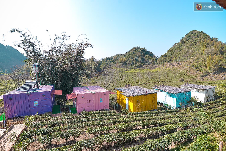Lên Mộc Châu, ngủ nhà container đầy sắc màu giữa rừng mận trắng, cải vàng - Ảnh 7.