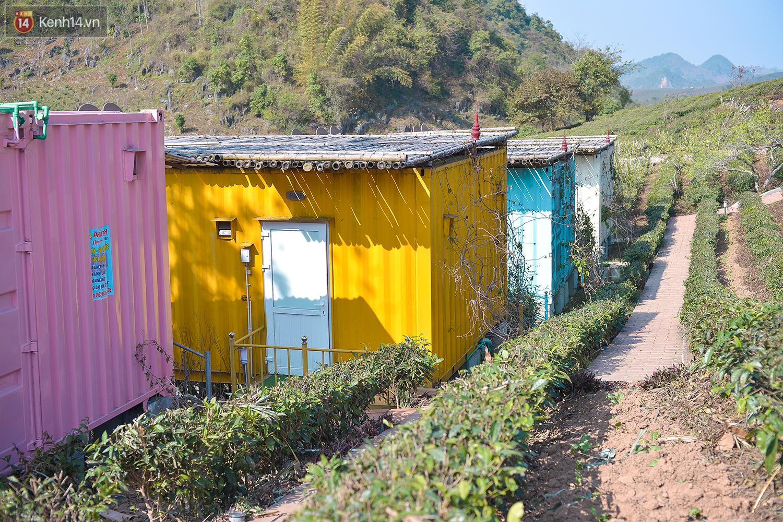 Lên Mộc Châu, ngủ nhà container đầy sắc màu giữa rừng mận trắng, cải vàng - Ảnh 11.