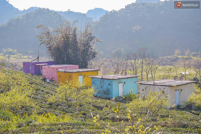 Lên Mộc Châu, ngủ nhà container đầy sắc màu giữa rừng mận trắng, cải vàng - Ảnh 13.