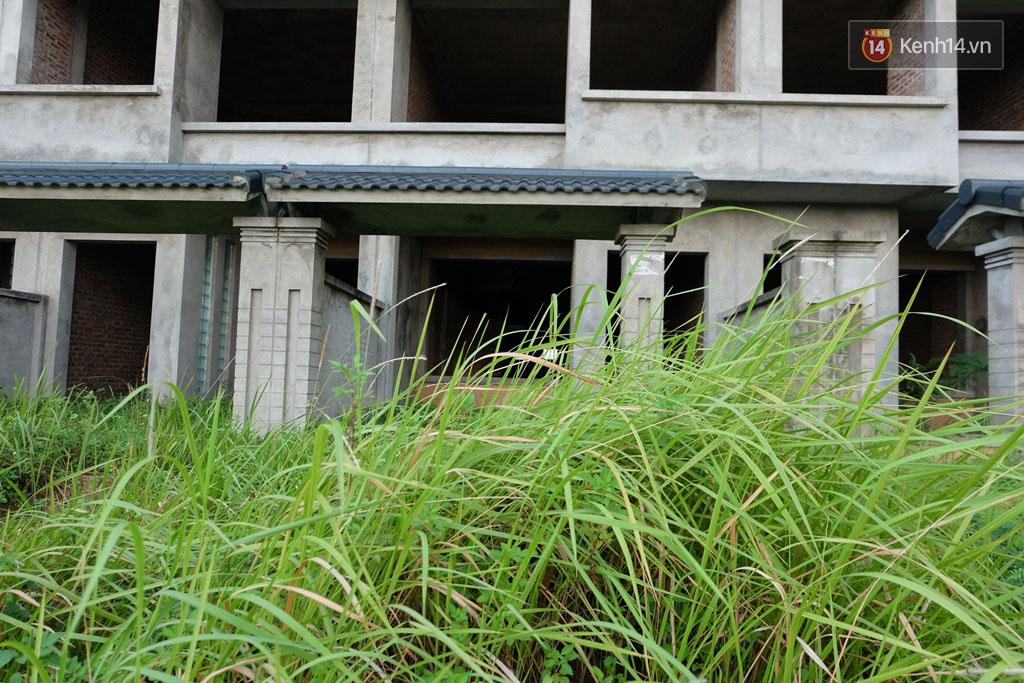 Biệt thự tiền tỷ biến thành nơi nuôi nhốt, chăn thả trâu bò ở Hà Nội - Ảnh 6.
