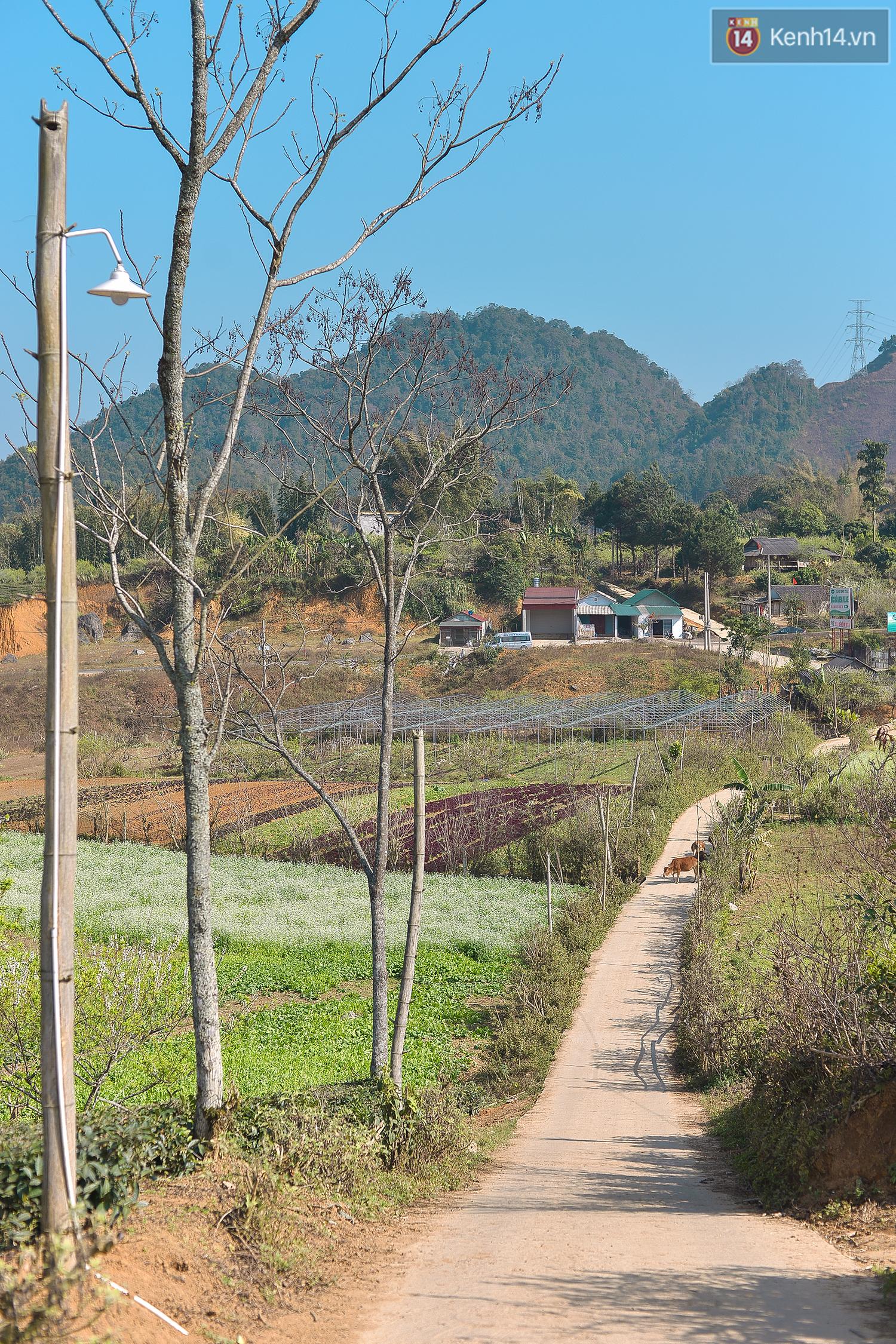 Lên Mộc Châu, ngủ nhà container đầy sắc màu giữa rừng mận trắng, cải vàng - Ảnh 1.