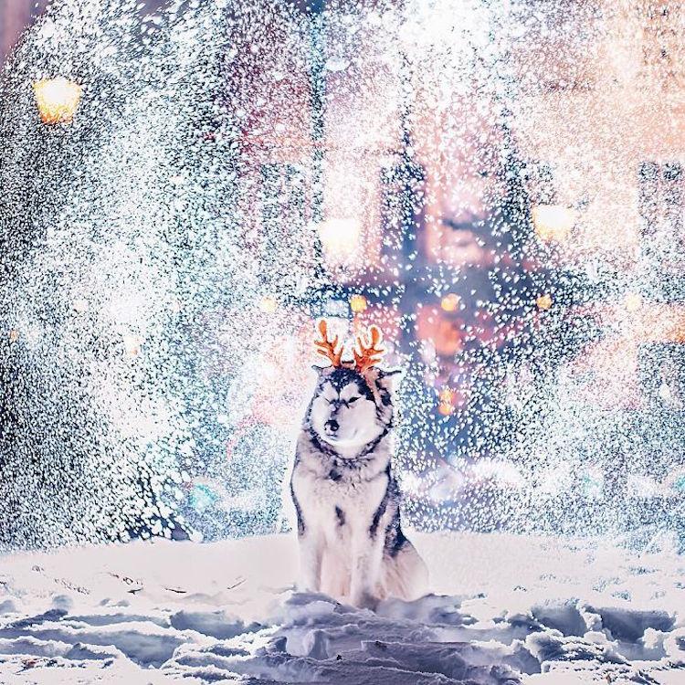 Ngỡ ngàng trước một Moscow mùa Giáng Sinh lung linh như truyện cổ tích - Ảnh 19.
