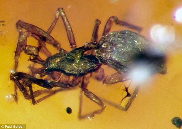 Có một loài nhện bất khả chiến bại tồn tại từ thời tiền sử đến tận bây giờ - Ảnh 1.