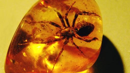 Có một loài nhện bất khả chiến bại tồn tại từ thời tiền sử đến tận bây giờ - Ảnh 12.
