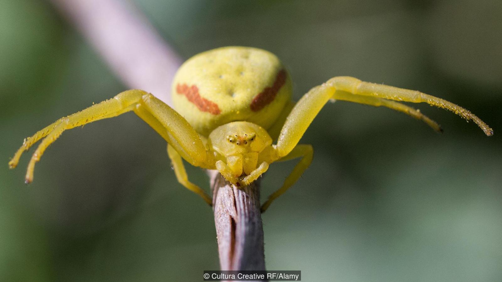 Có một loài nhện bất khả chiến bại tồn tại từ thời tiền sử đến tận bây giờ - Ảnh 8.