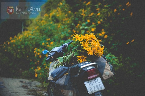 Tháng 11 đến rồi, nhất định phải đi Tây Bắc để hưởng cái lạnh và ngắm 3 loài hoa này - Ảnh 15.