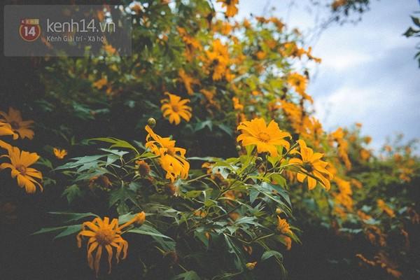 Tháng 11 đến rồi, nhất định phải đi Tây Bắc để hưởng cái lạnh và ngắm 3 loài hoa này - Ảnh 16.