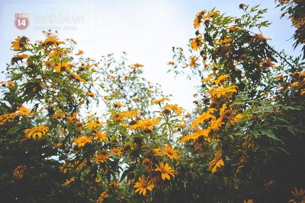 Tháng 11 đến rồi, nhất định phải đi Tây Bắc để hưởng cái lạnh và ngắm 3 loài hoa này - Ảnh 14.