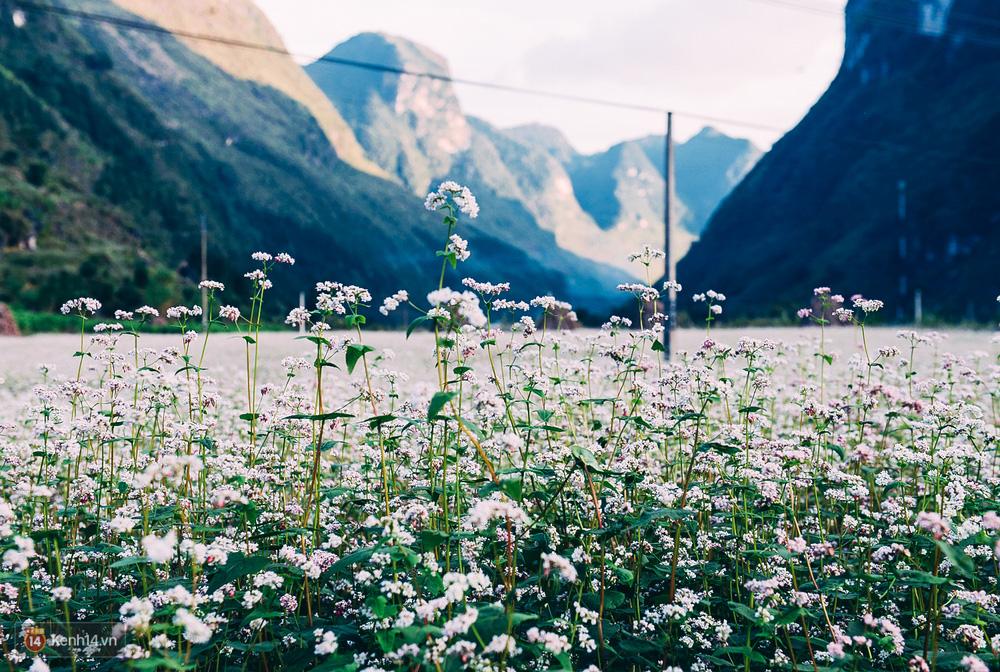 Tháng 11 đến rồi, nhất định phải đi Tây Bắc để hưởng cái lạnh và ngắm 3 loài hoa này - Ảnh 1.