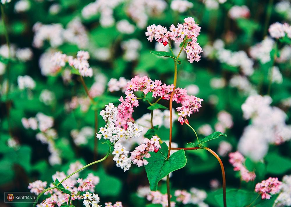 Tháng 11 đến rồi, nhất định phải đi Tây Bắc để hưởng cái lạnh và ngắm 3 loài hoa này - Ảnh 2.