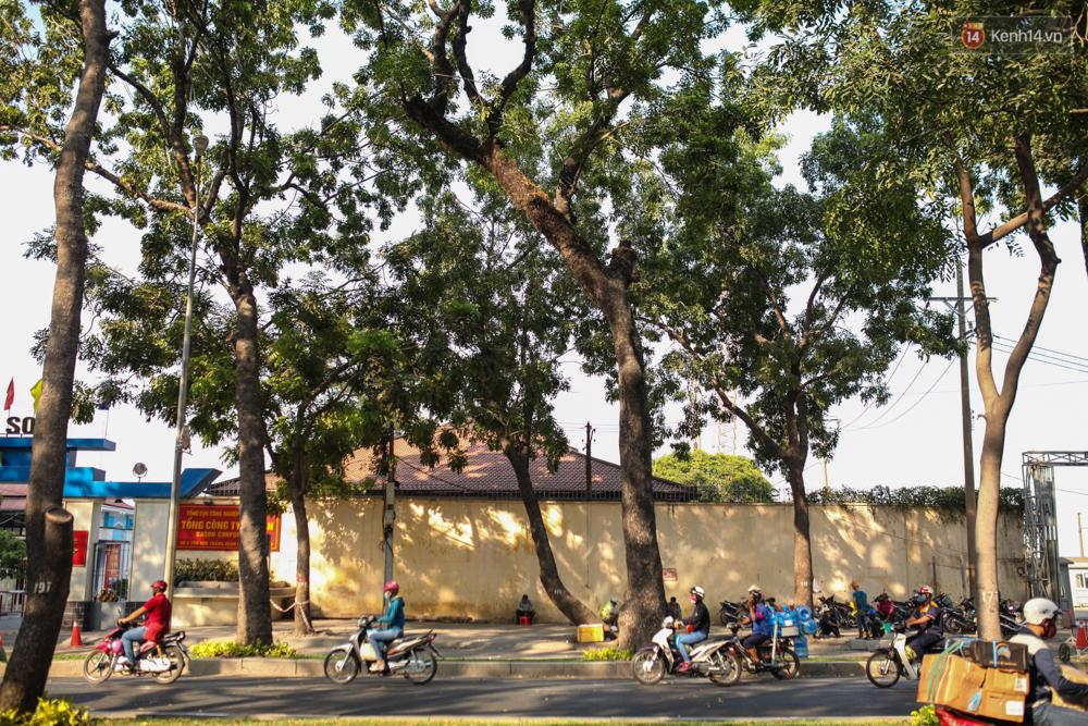 TPHCM: Ngắm nhìn hàng cây xanh trên đường Tôn Đức Thắng trước khi 300 cây sẽ bị chặt hạ - Ảnh 1.