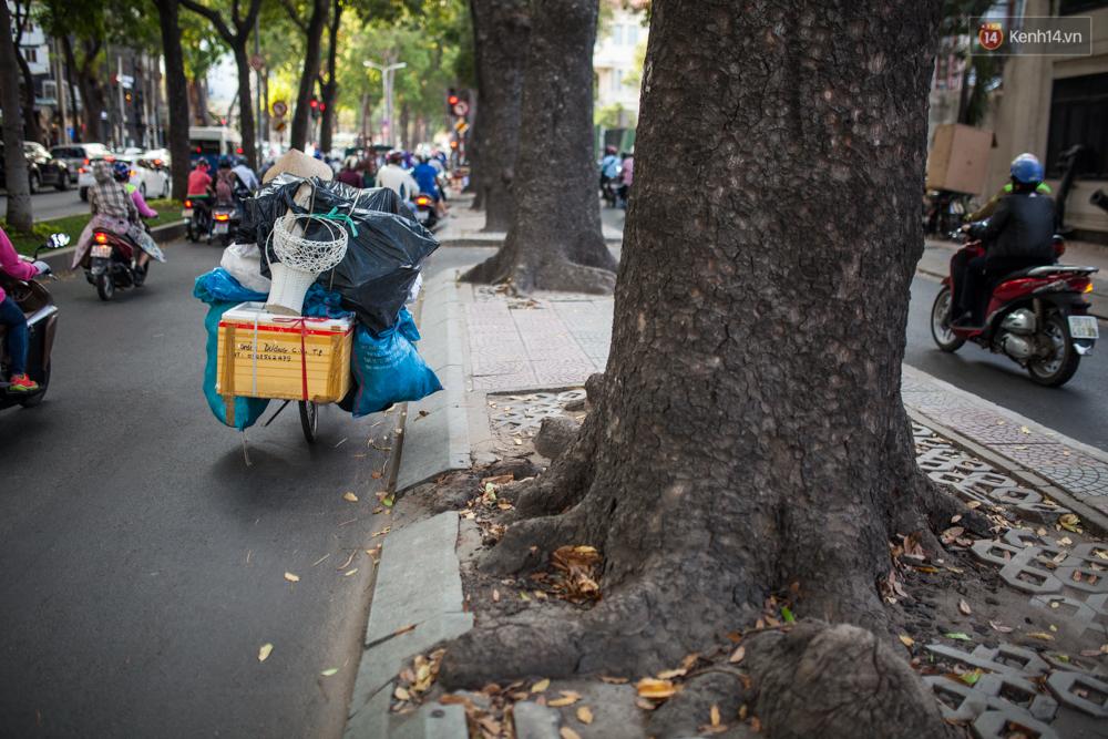 TPHCM: Ngắm nhìn hàng cây xanh trên đường Tôn Đức Thắng trước khi 300 cây sẽ bị chặt hạ - Ảnh 8.