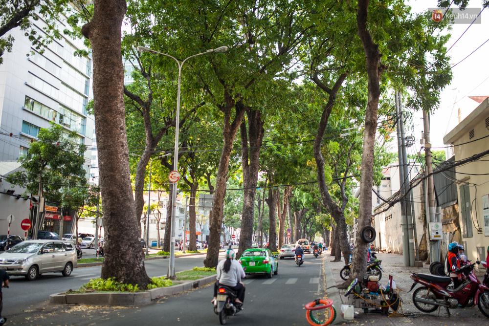 TPHCM: Ngắm nhìn hàng cây xanh trên đường Tôn Đức Thắng trước khi 300 cây sẽ bị chặt hạ - Ảnh 9.