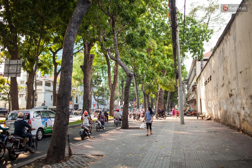 TPHCM: Ngắm nhìn hàng cây xanh trên đường Tôn Đức Thắng trước khi 300 cây sẽ bị chặt hạ - Ảnh 11.