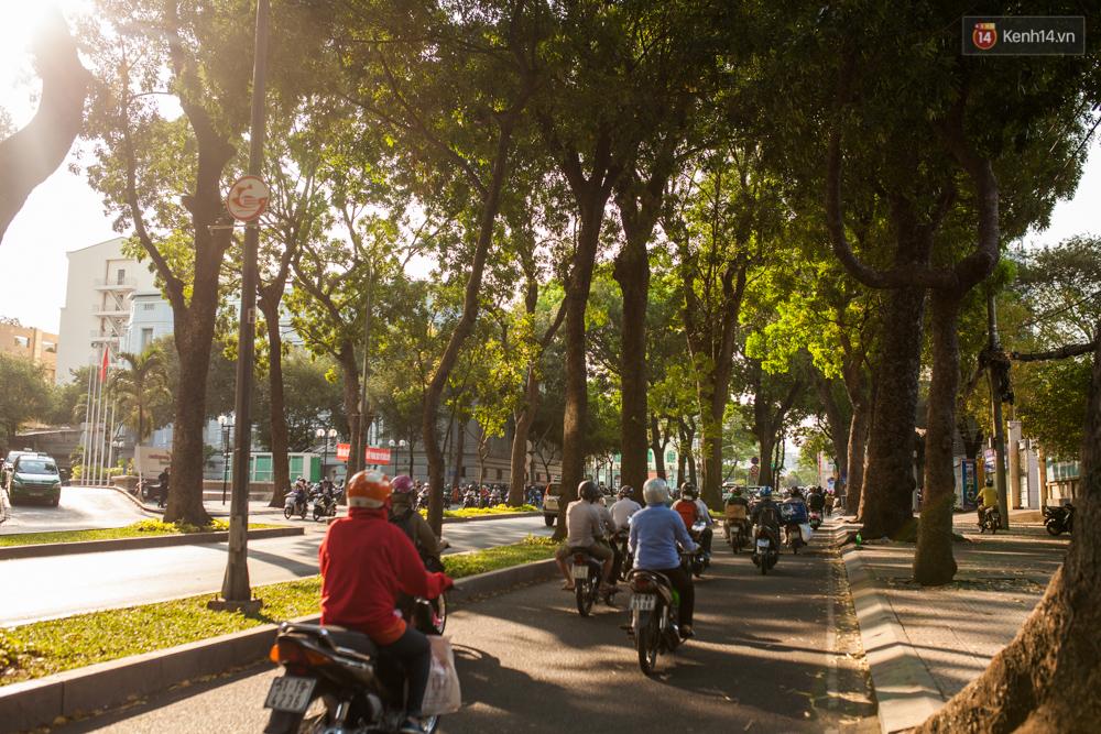 TPHCM: Ngắm nhìn hàng cây xanh trên đường Tôn Đức Thắng trước khi 300 cây sẽ bị chặt hạ - Ảnh 13.
