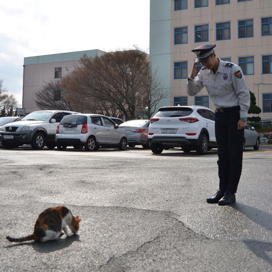 Cô mèo đáng thương mất đi những đứa con và hành động tuyệt vời của lực lượng cảnh sát Busan, Hàn Quốc - Ảnh 4.