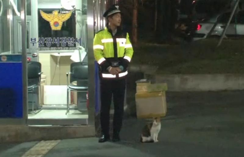 Cô mèo đáng thương mất đi những đứa con và hành động tuyệt vời của lực lượng cảnh sát Busan, Hàn Quốc - Ảnh 5.