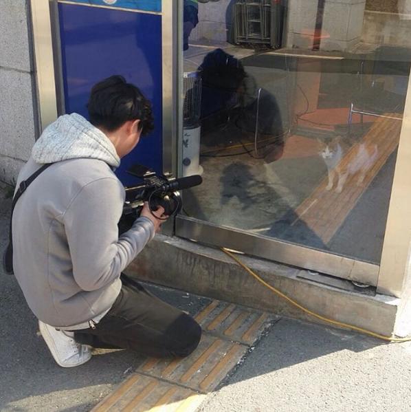 Cô mèo đáng thương mất đi những đứa con và hành động tuyệt vời của lực lượng cảnh sát Busan, Hàn Quốc - Ảnh 6.
