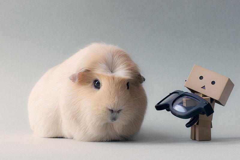 Gặp gỡ Booboo - chàng hot boy siêu cute của giới chuột lang - Ảnh 12.