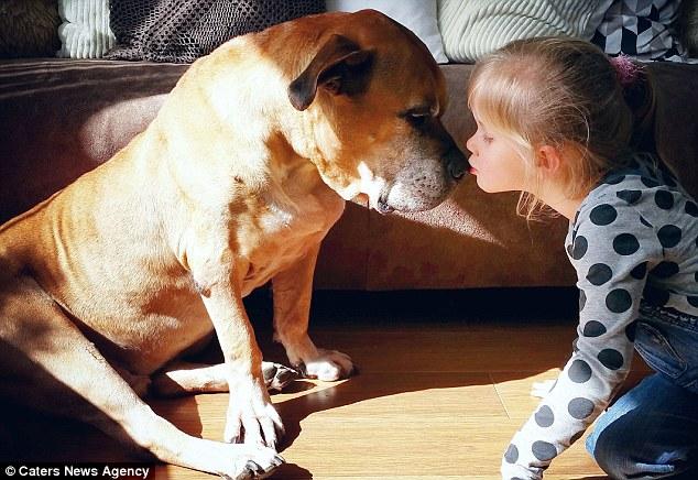 Giây phút vĩnh biệt đầy xúc động của cô bé 6 tuổi với chú chó mù và điếc - Ảnh 3.