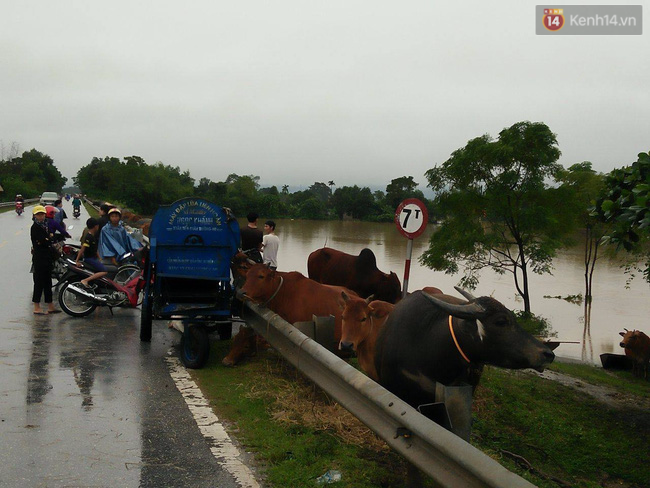 Chùm ảnh: Những hình ảnh nhói lòng về mưa lũ kinh hoàng ở miền Trung - Ảnh 12.